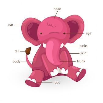 Parte de vocabulário de elefante do vetor de corpo