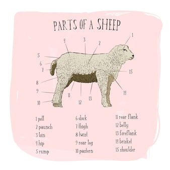 Parte do estilo de desenho de ovelhas