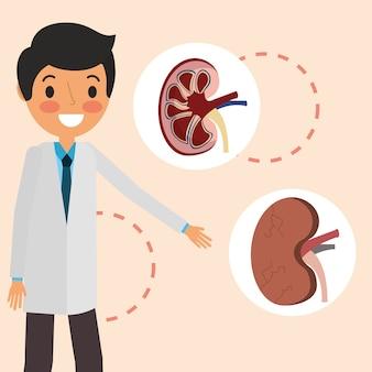 Parte profissional dos órgãos renais do doutor