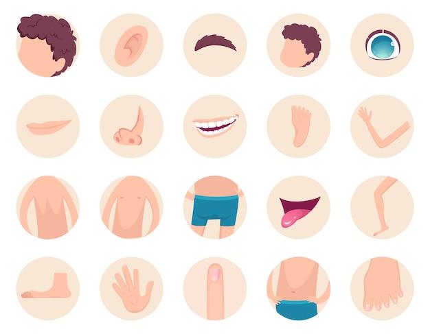 Partes do corpo. anatomia humana cabeça pernas dedos nariz mãos volta coleção de fragmentos de barriga. ilustração de costas e cabeça humana, pé e mão