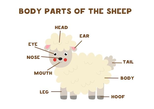 Partes do corpo da ovelha bonito dos desenhos animados. anatomia de animais em inglês para crianças. aprendendo palavras.