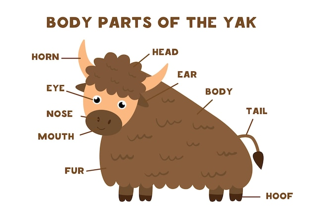 Partes do corpo do bonito iaque. anatomia de animais