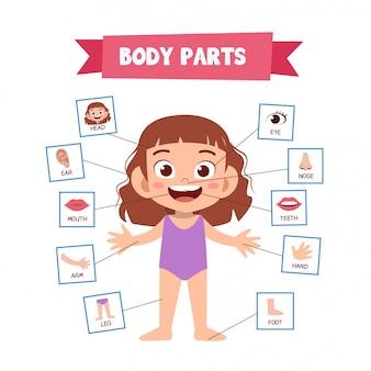 Partes do corpo humano