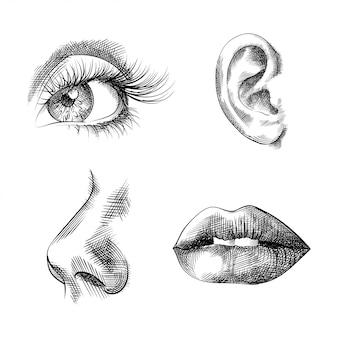 Partes do rosto mão esboços desenhados, olho, orelha, nariz, lábios