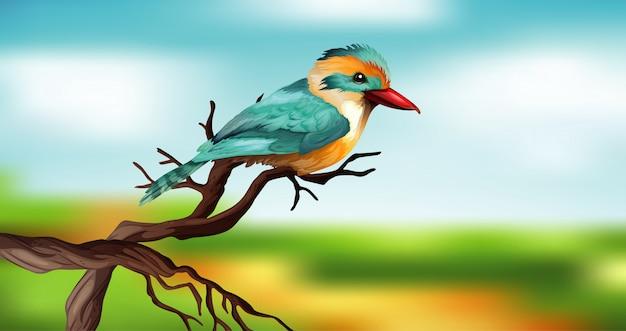 Pássaro azul no galho de madeira com céu