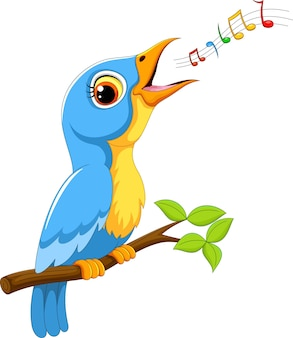 Pássaro bonito cantando