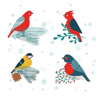 Pássaro chapim, dom-fafe sentado no galho do abeto, visco e bagas do azevinho isoladas no fundo branco.