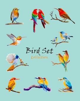 Pássaro conjunto aquarela pintura original colorido de pássaro