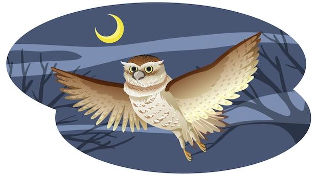 Pássaro coruja em pose de vôo à noite