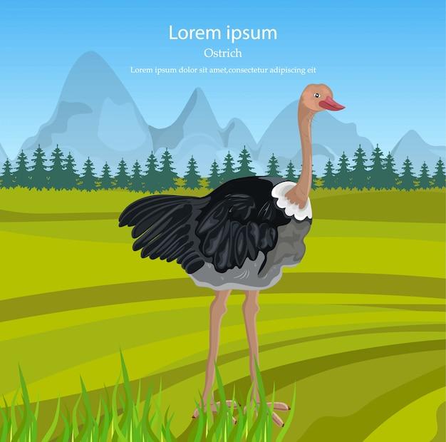 Pássaro de avestruz na natureza selvagem