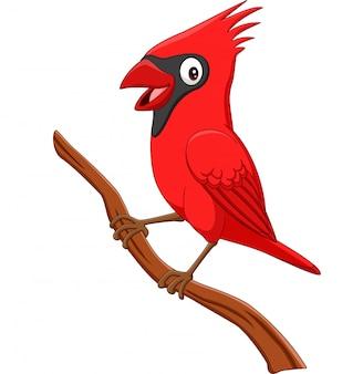 Pássaro de cardeal dos desenhos animados no galho de árvore