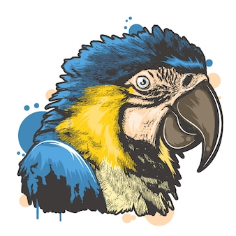 Pássaro de cor completa