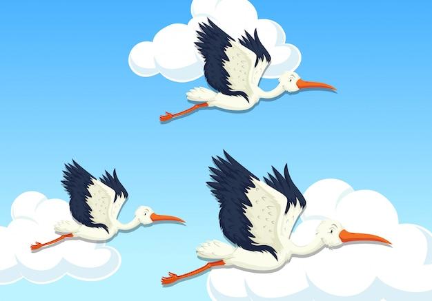 Pássaro de garça voando no céu