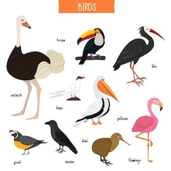 Pássaro definir ilustração vetorial isolado