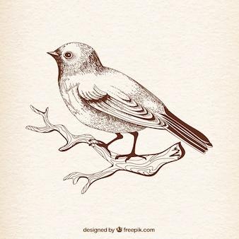 Pássaro desenhado mão