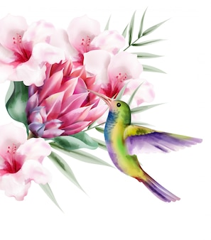 Pássaro em aquarela paraíso tropical com penas coloridas