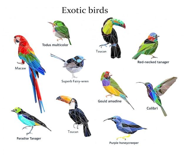 Pássaro exótico definir ilustração vetorial baixo poli