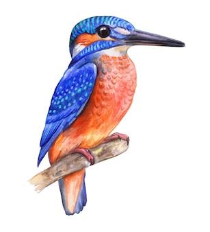 Pássaro martim-pescador isolado no fundo branco ilustração em aquarela imagem do modelo