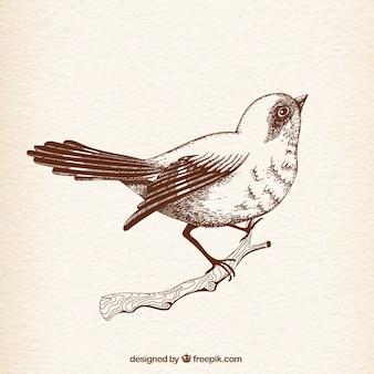 Pássaro no estilo desenhado mão