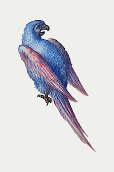 Pássaro papagaio vintage desenhado à mão