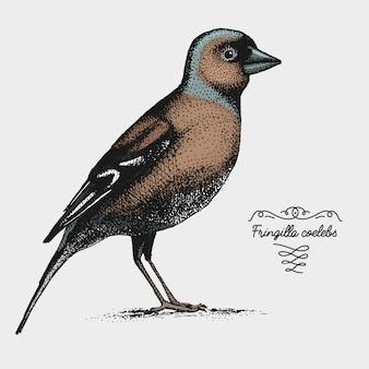 Pássaro realista desenhada de mão, estilo gráfico de desenho
