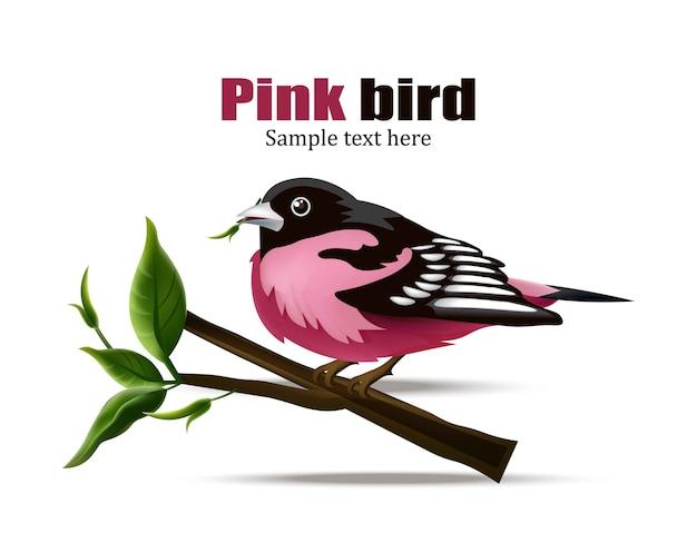 Pássaro rosa realista isolado no fundo branco