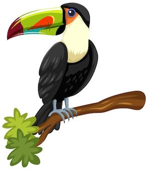 Pássaro tucano em um galho isolado no fundo branco