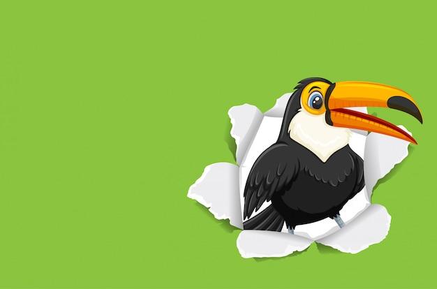 Pássaro tucano selvagem