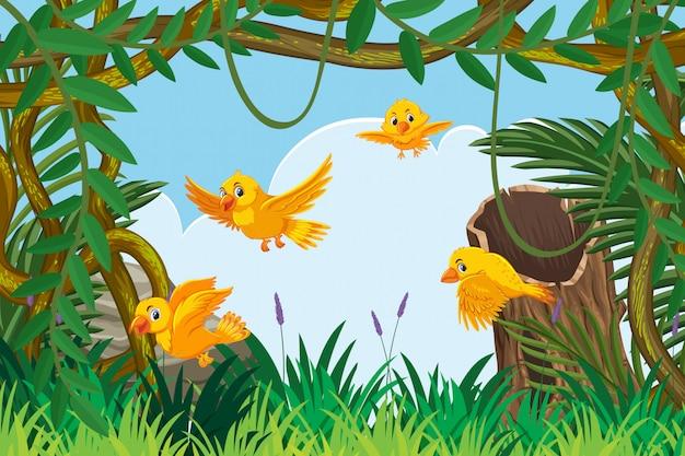 Pássaros amarelos na cena da selva