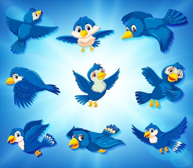 Pássaros azuis em fundo azul com posições diferentes