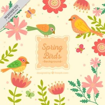 Pássaros bonitos da primavera fundo