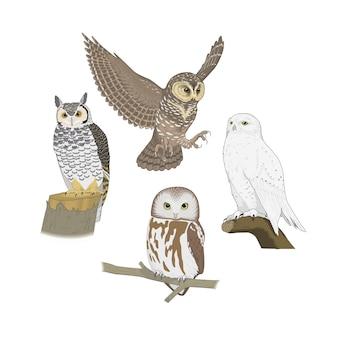 Pássaros da floresta corujas e corujas
