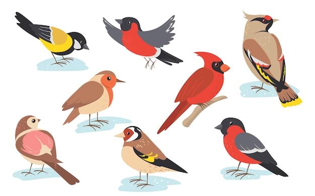 Pássaros de inverno nevado voando ou segurando um galho.