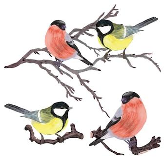 Pássaros de inverno no conjunto de galhos