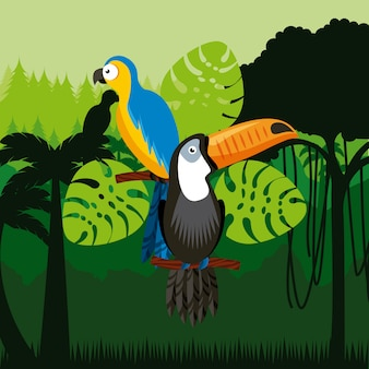 Pássaros de tucano e arara