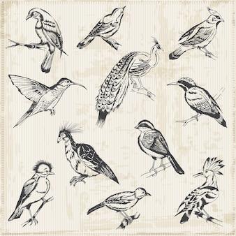 Pássaros desenhados à mão