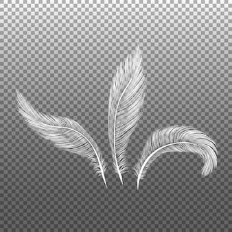 Pássaros em plumagem, penas onduladas fofas caindo, penas de asas de anjo voando penas realistas.