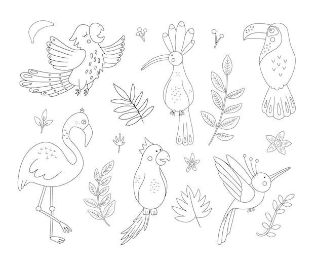 Pássaros exóticos bonitos, folhas, contornos de flores. animais tropicais engraçados e ilustração a preto e branco de plantas. desenho de verão na selva