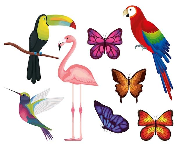 Pássaros exóticos e tropicais e borboletas vector design ilustração