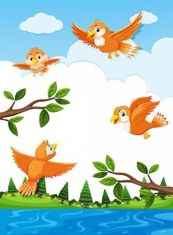 Pássaros laranja na natureza