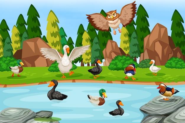 Pássaros na cena do lago