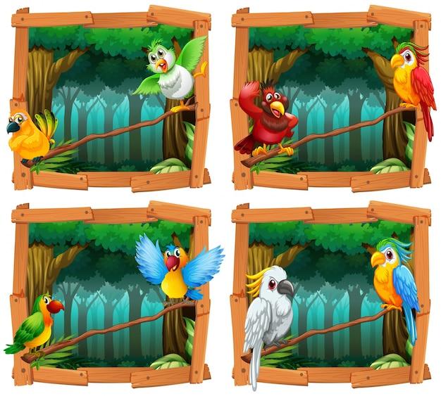 Pássaros selvagens na floresta