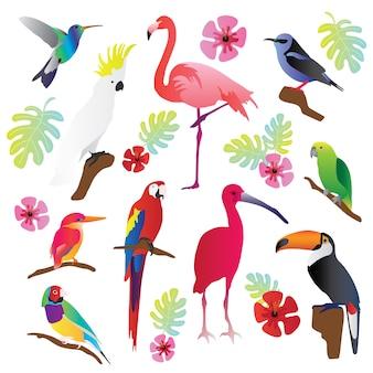 Pássaros tropicais vector coleção de ilustração