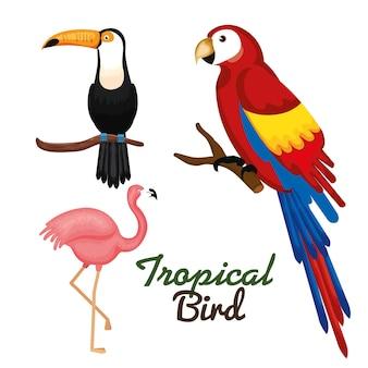 Pássaros tropicais