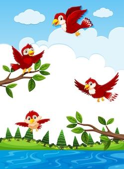 Pássaros vermelhos na natureza
