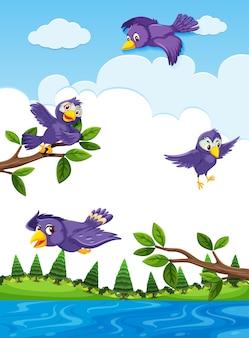 Pássaros voando na natureza