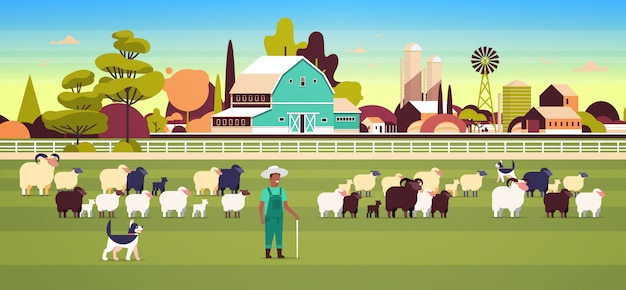 Pastor com vara e cães reunindo rebanho de ovelhas negras brancas macho fazendeiro criação de ovelhas conceito de fazenda campo terra paisagem horizontal comprimento total