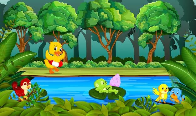 Pato nadando no rio