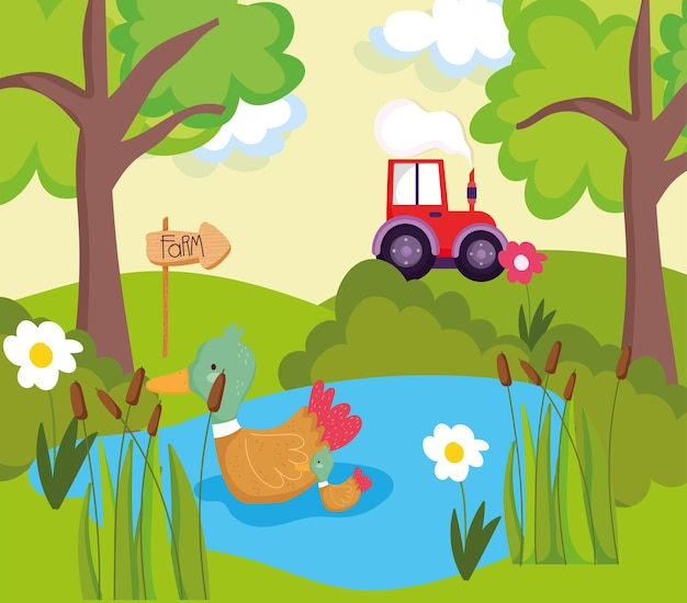 Patos de fazenda no lago