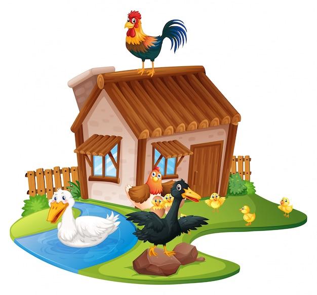 Patos e galinhas na fazenda